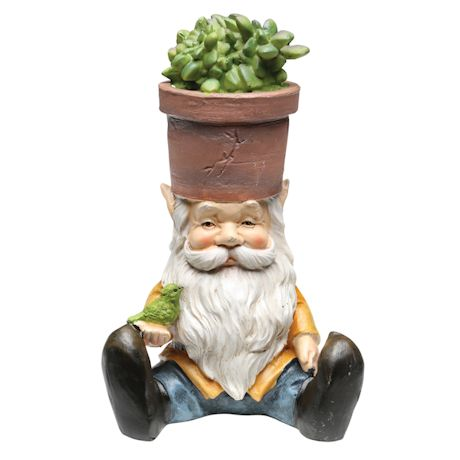 Gnomes With Succulent Heads