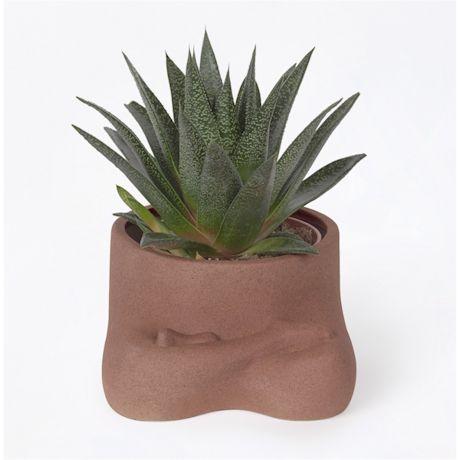 Namaste Planter