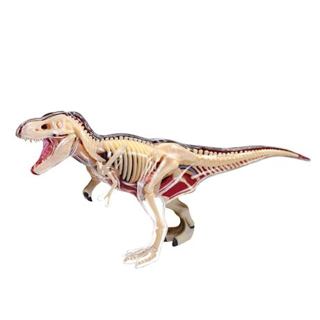 T-Rex Anatomy Model Kits