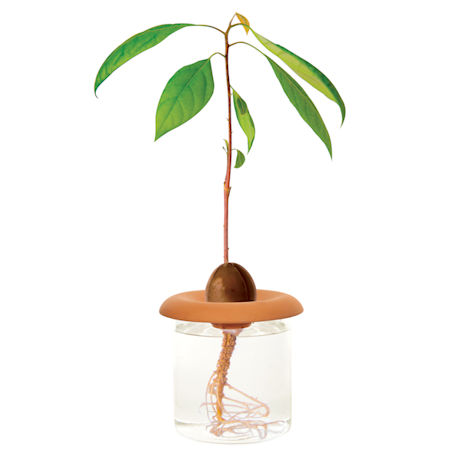 Terra Cotta Seed Sprouters