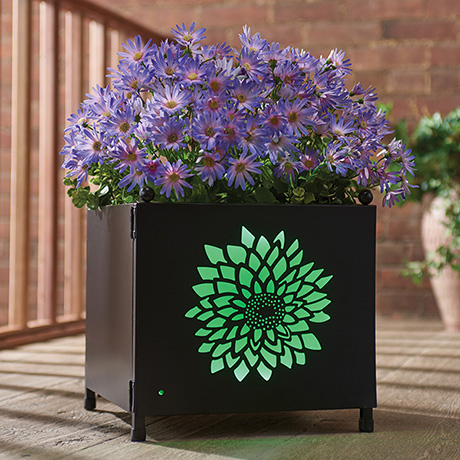 Light-Up Planter with Interchangeable Panels
