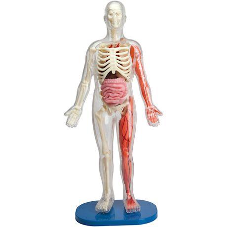 Human Skull and Brain - SmartLab Toys Squishy Body Toy Set