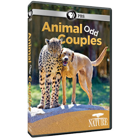 Nature: Animal Odd Couples DVD